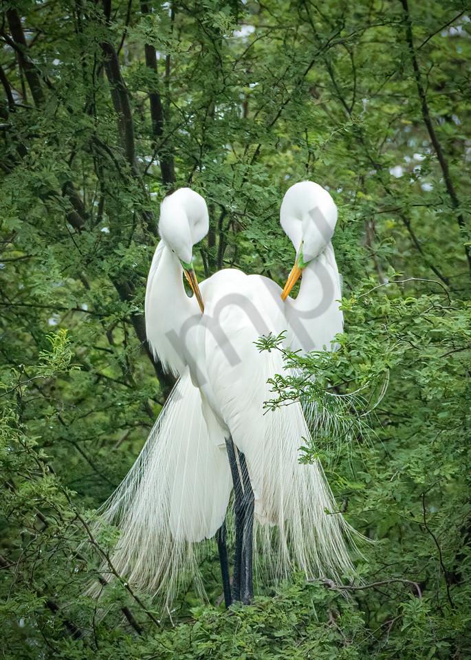 Preening Pair Photography Art | John Martell Photography