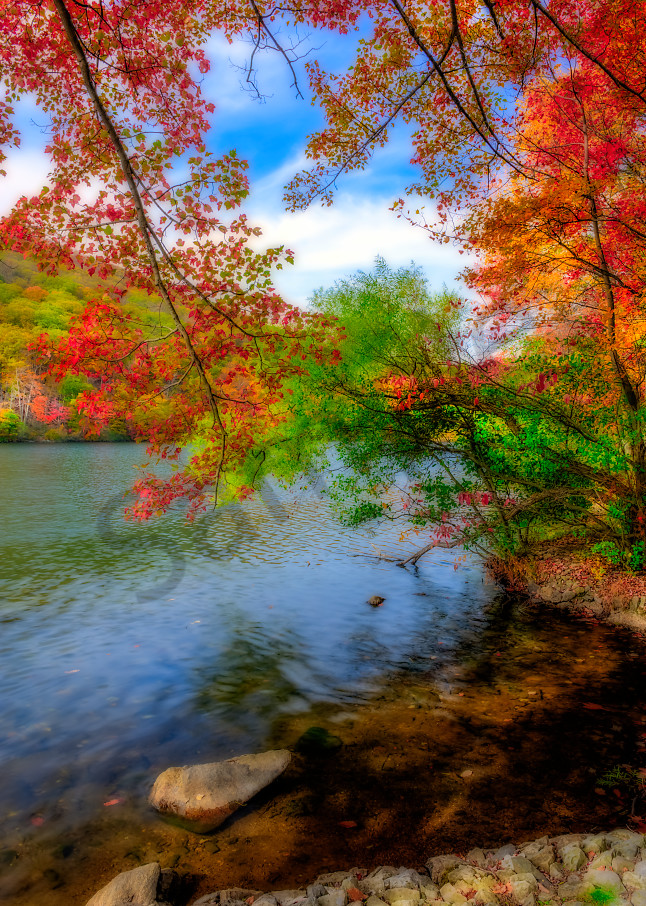 Red leaves overhanging lake