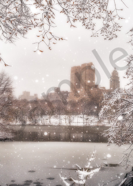 Snow-covered branches in Central Park