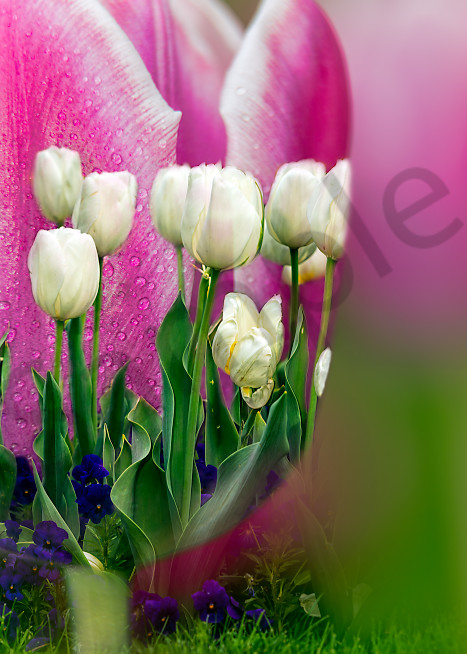 Special effect tulip compilation