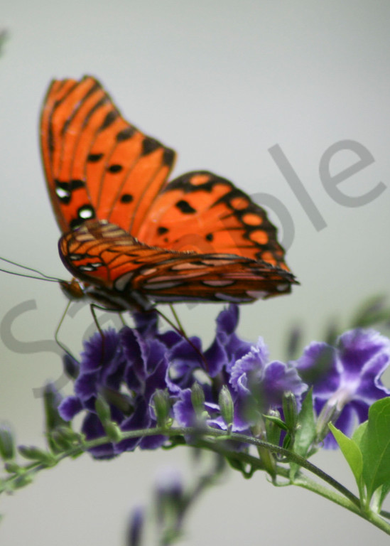 Monarch Butterfly Photography Art | It's Your World - Enjoy!