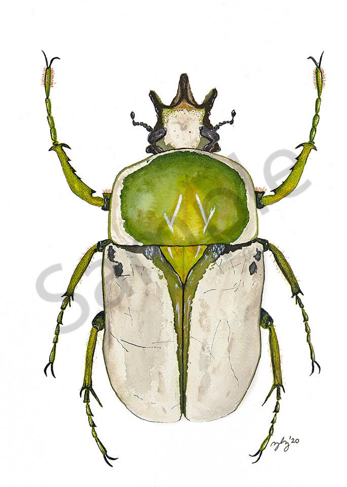 Beetle 1 Art   Cincy Artwork