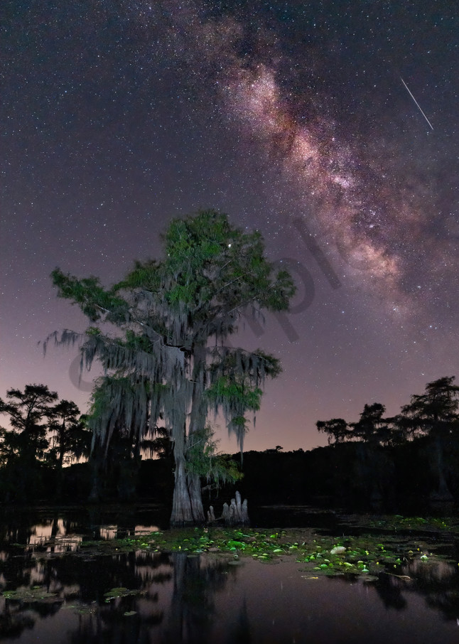 Caddo Lake 1 Photography Art | John Martell Photography
