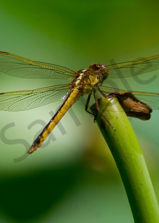 Translucent Wings Photography Art | It's Your World - Enjoy!