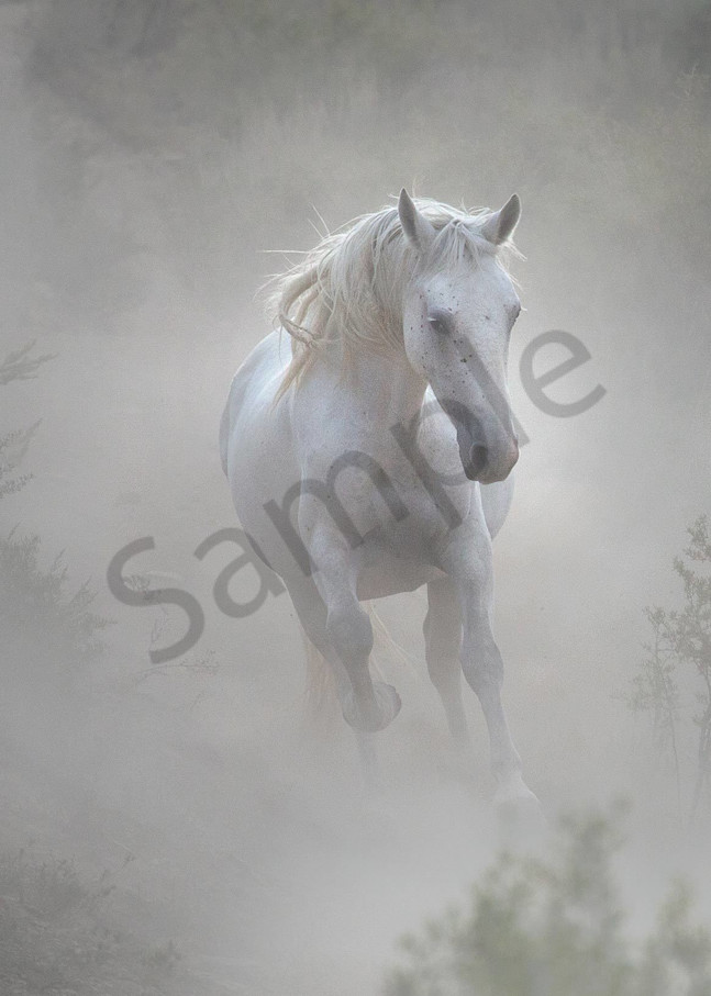 0078 Wild Mustang Art | Cunningham Gallery