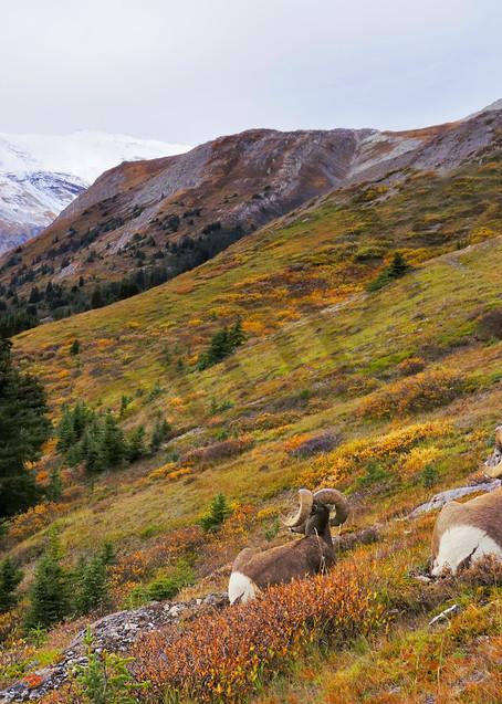 Enjoying fall in the Rockies.