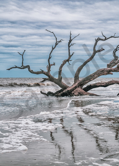 Driftwood Reflections | Susan J Photography