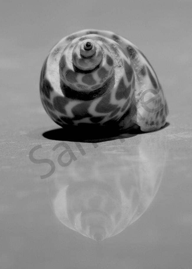 Shell Larrain Photography Art   CLAUDIA LARRAIN