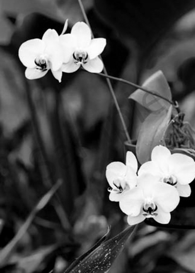Orchid3 Photography Art | CLAUDIA LARRAIN