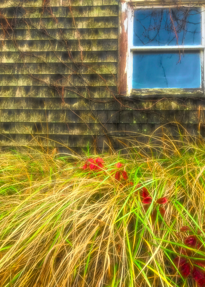Window Vines and Grass|Fine art photography by Todd Breitling|ToddBreitlingArt.com