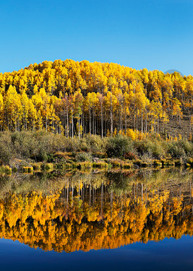 Beaver Pond Creede,Colorado Art | Cunningham Gallery