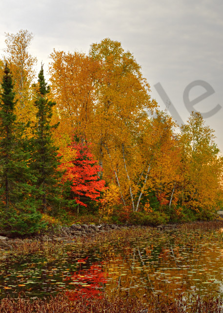 Autumn On A Lake In Northern Minnesota Photography Art | LHR Images