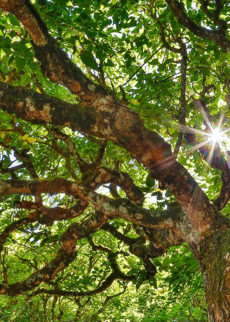 Awakening of the Trees Photograph