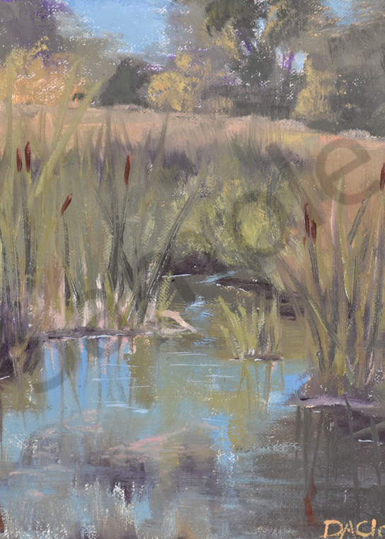 Reeds in the Pond