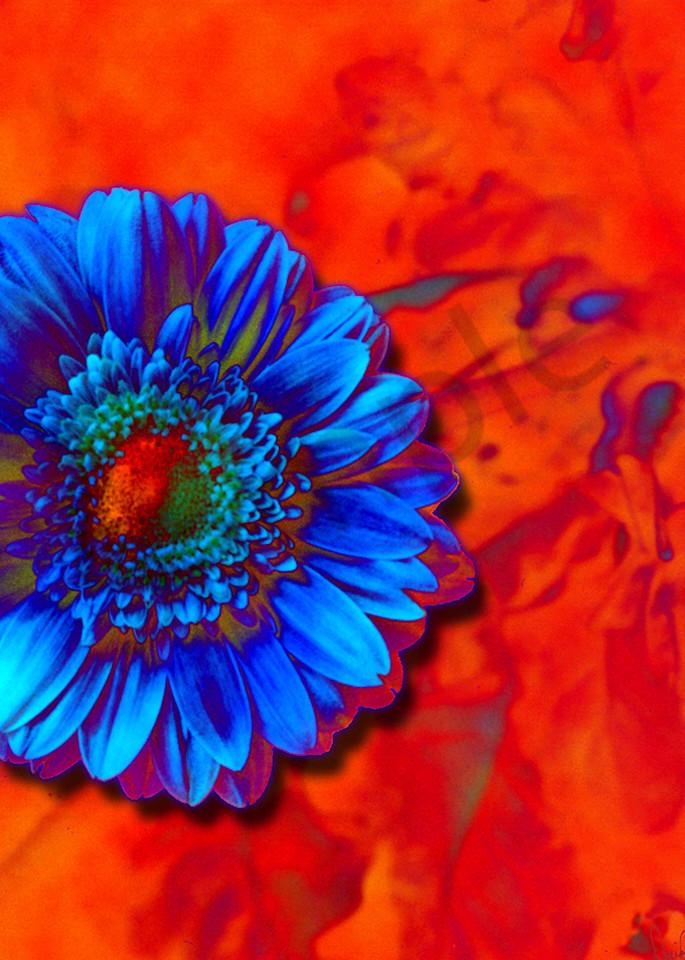 Flower 31 Art | Cincy Artwork