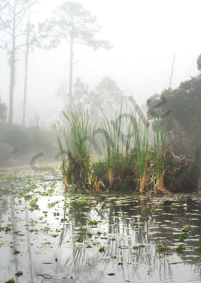 0339 Early Morning Fog   Art | Cunningham Gallery