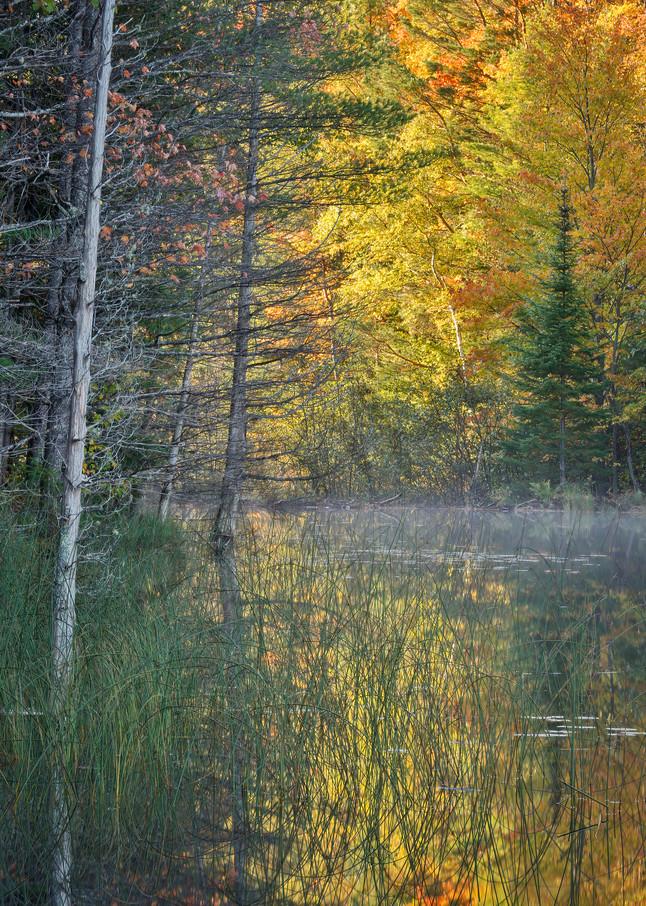 Light through the Trees Photograph