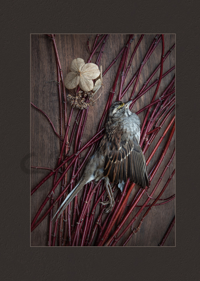 Observance Photography Art | Kim Bova Photography