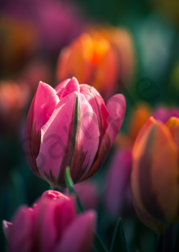 Spring Warmth Photography Art | Kim Bova Photography