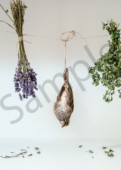 Drying Out Photography Art   Kim Bova Photography