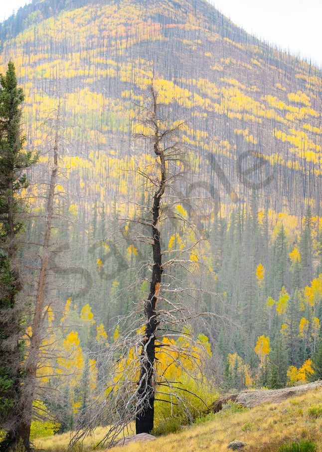 2280 Crooked Tree  Art | Cunningham Gallery