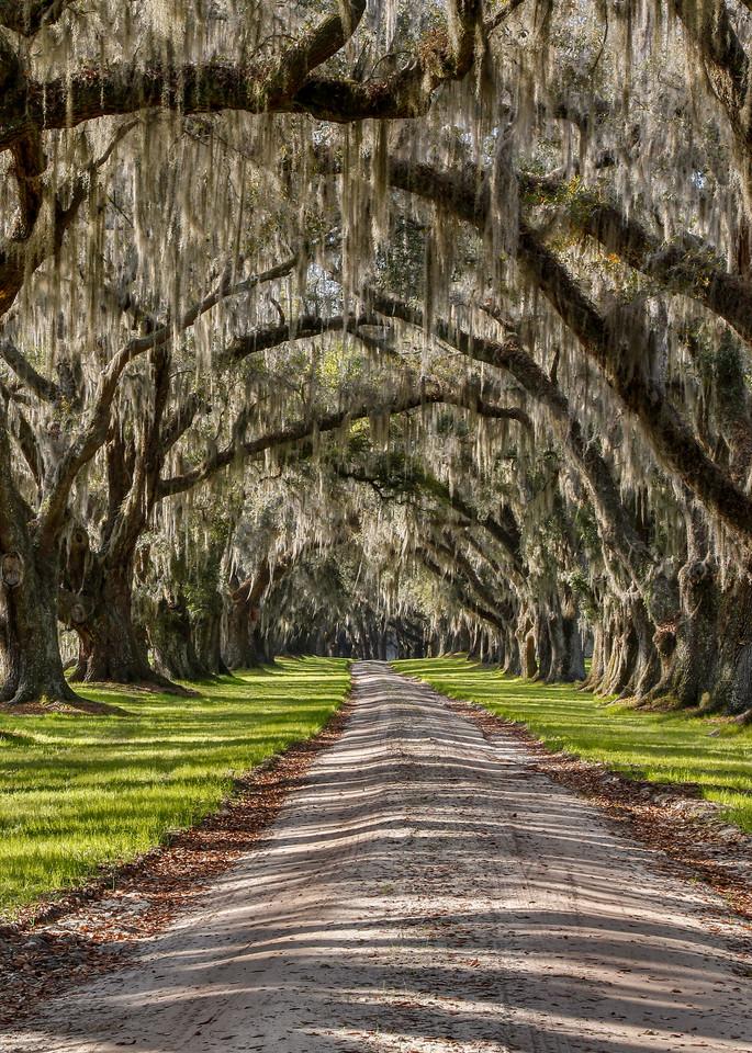 Arbor Embrace Photograph