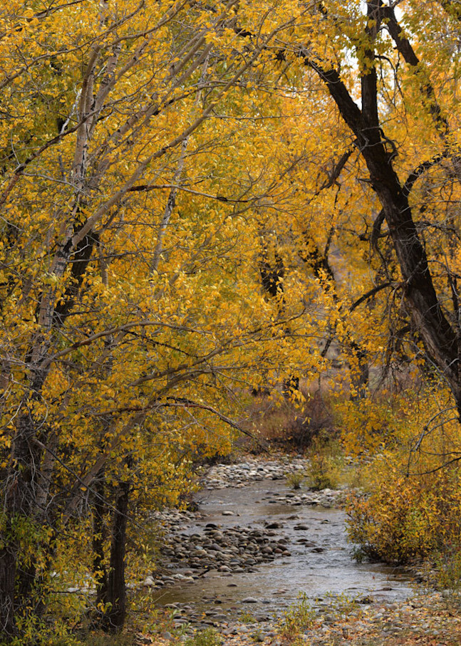 """""""Lost Creek"""" fine art photograph by Fred Neveu."""