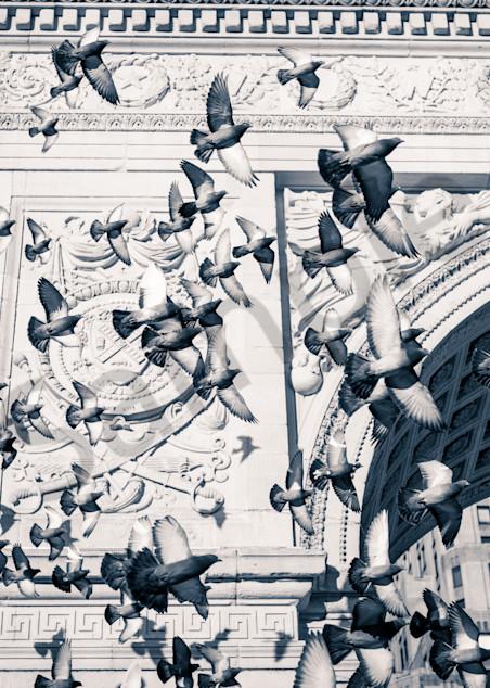 Washington Square Pigeons Photography Art | Insomnigraphic