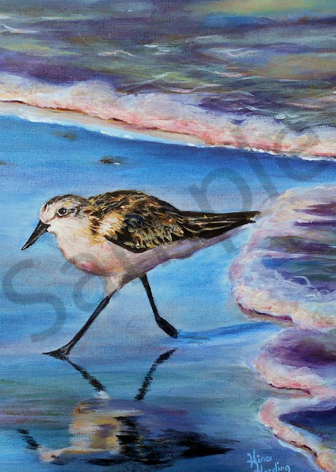"""Sunrise Plover"" by Indiana Artist Gina Harding   Prophetics Gallery"
