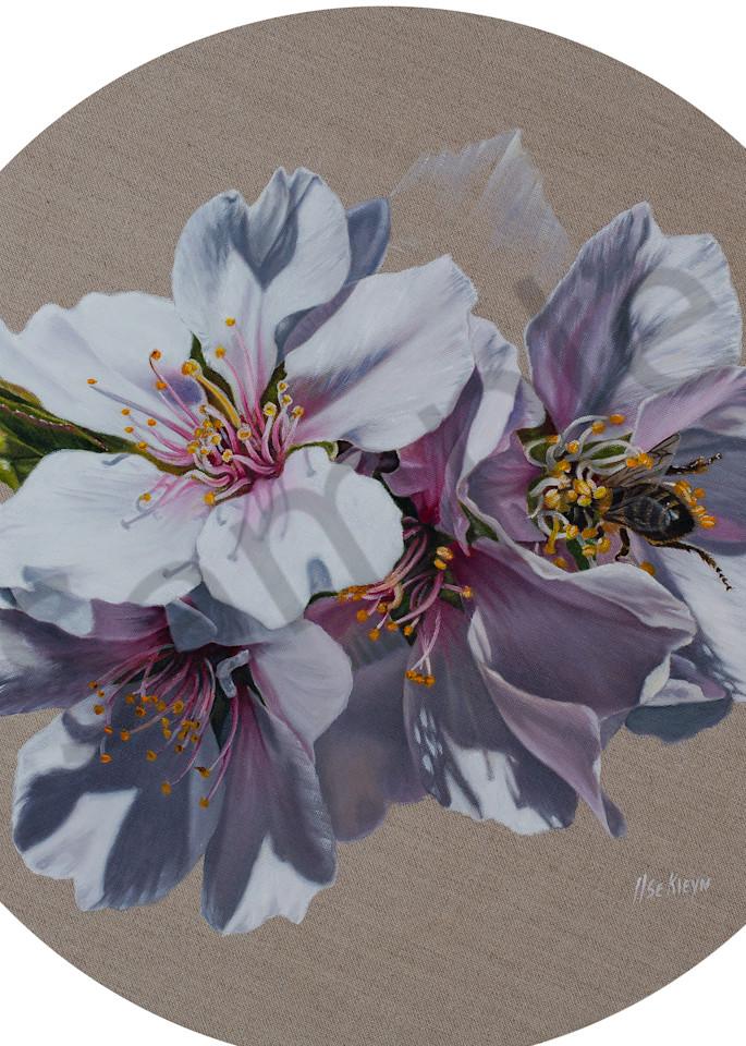 """Almond Blossoms"" by South African Prophetic Artist Ilse Kleyn   Prophetics Gallery"