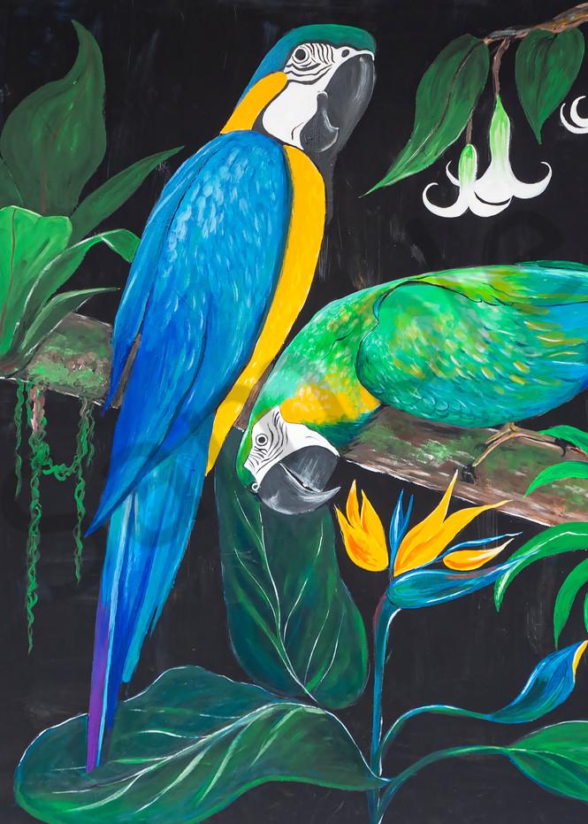 """""""Parrots"""" by German Prophetic Artist Angela Günther   Prophetics Gallery"""