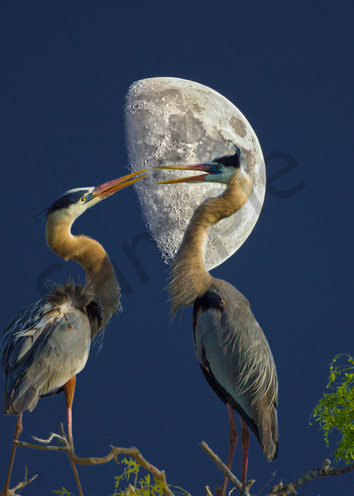 Midnight Blues Photography Art   John Martell Photography
