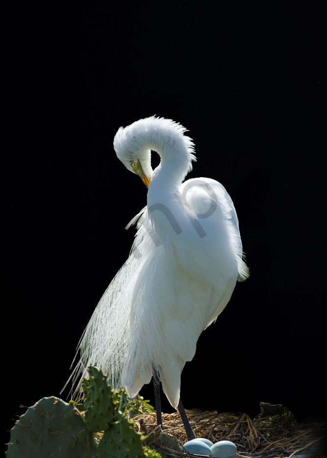 Moonlit Egret Photography Art | John Martell Photography