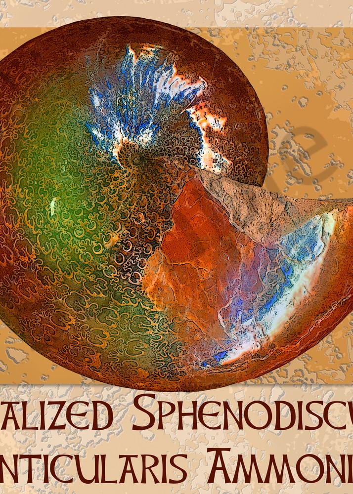 Opalized Sphenodiscus Lenticularis