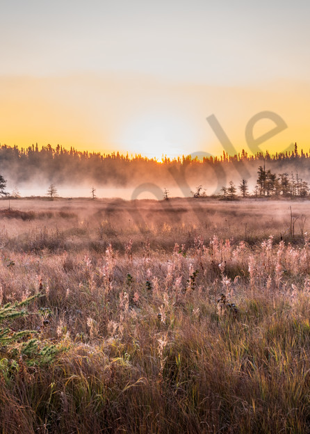 Meadow Morning Art | Andrew Collett Photography