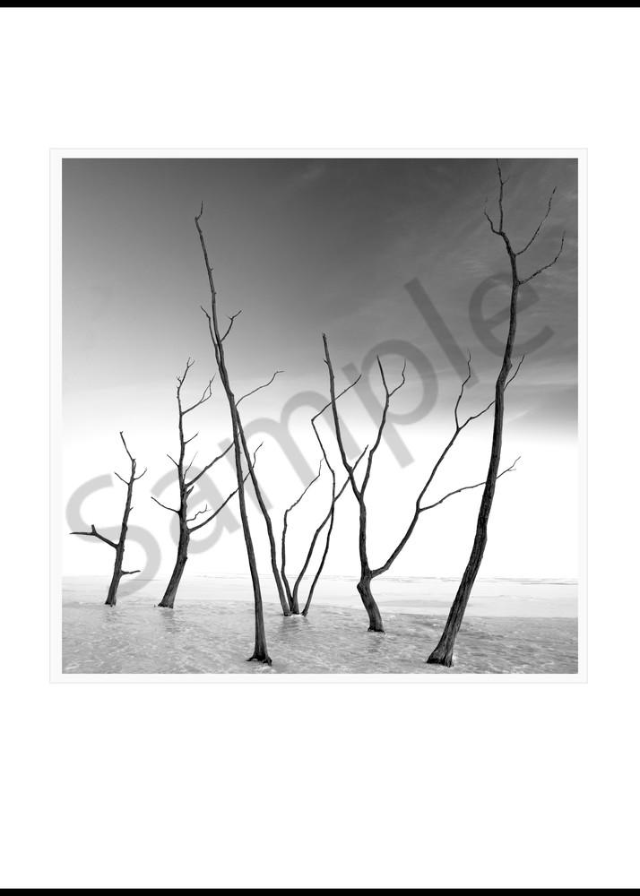 Frozen Trees... Frozen Lake Art | Roy Fraser Photographer