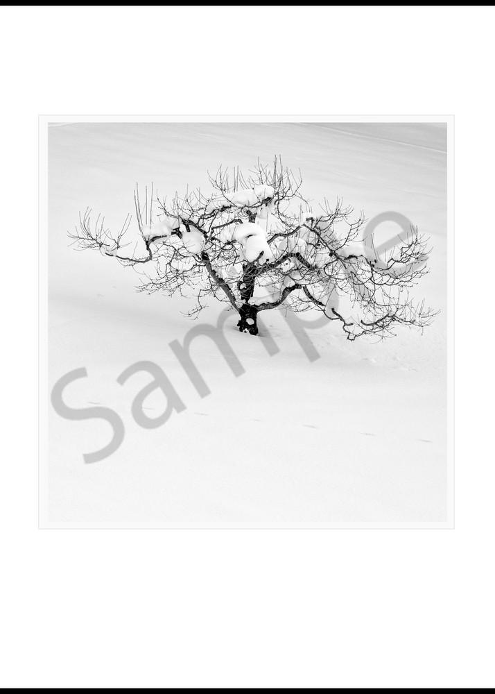 Orchard Tree Art   Roy Fraser Photographer
