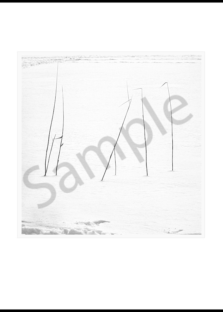 Reeds Art | Roy Fraser Photographer