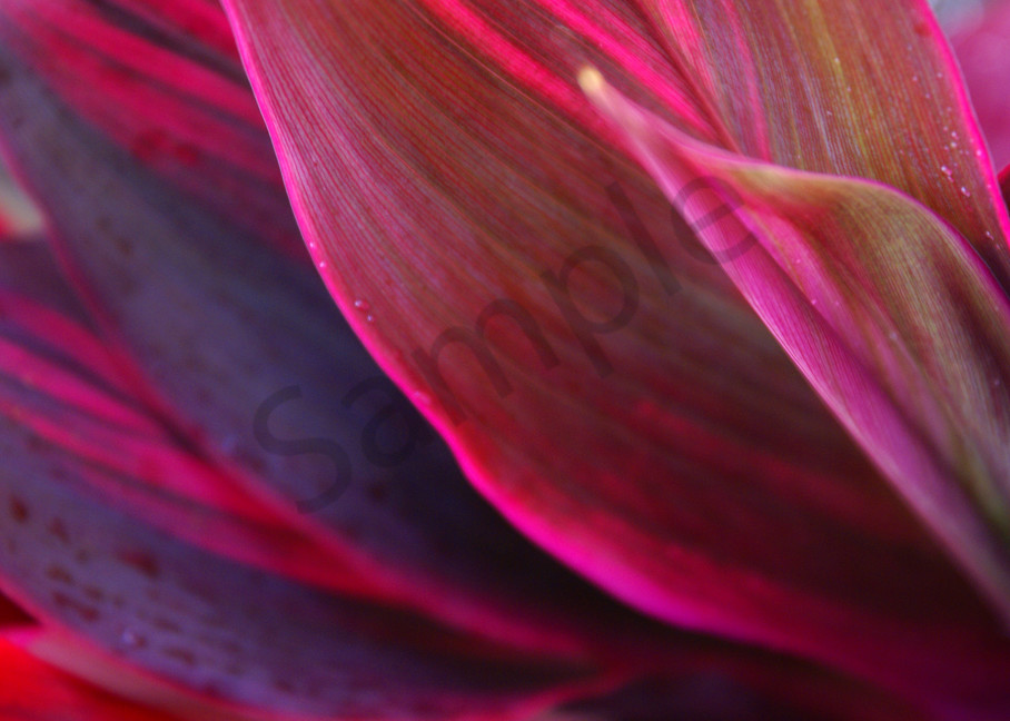 Fine Art Photography | Candy Ti by Doreen Decasa