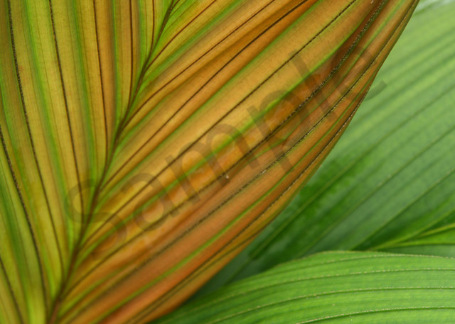 Fine Art Photography | Gold Palm Patterns by Doreen Decasa