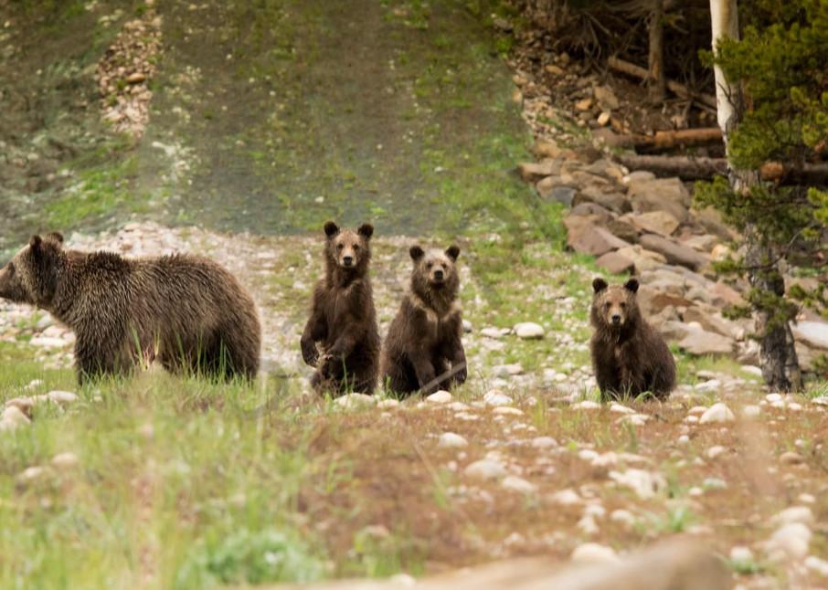 Dsc8744 Blondy Cubs Spy27z Photography Art   Swan Valley Photo