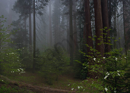 Mystery Of The Forest Art | Scott Cordner Photography
