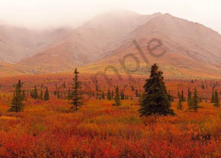 Autumn Alaska Art | Scott Cordner Photography