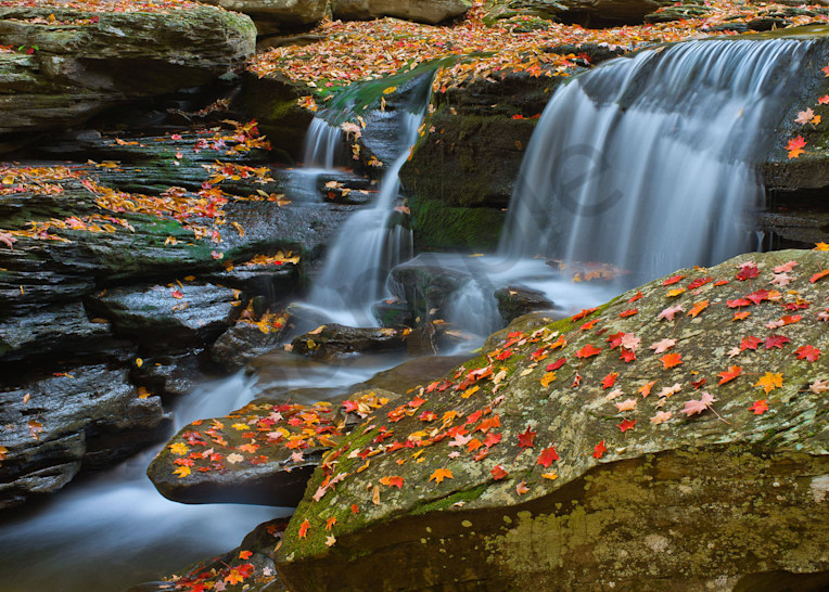 Falling Leaves Ii Art | Scott Cordner Photography