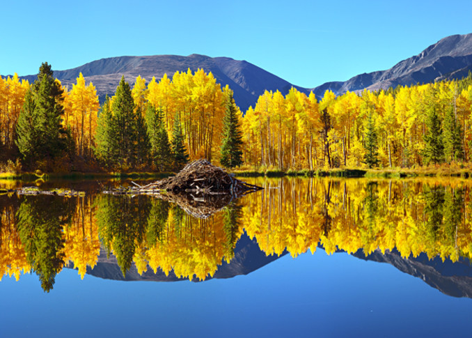2009 Beaver Ponds Near Twin Lakes, Colorado Art | Cunningham Gallery
