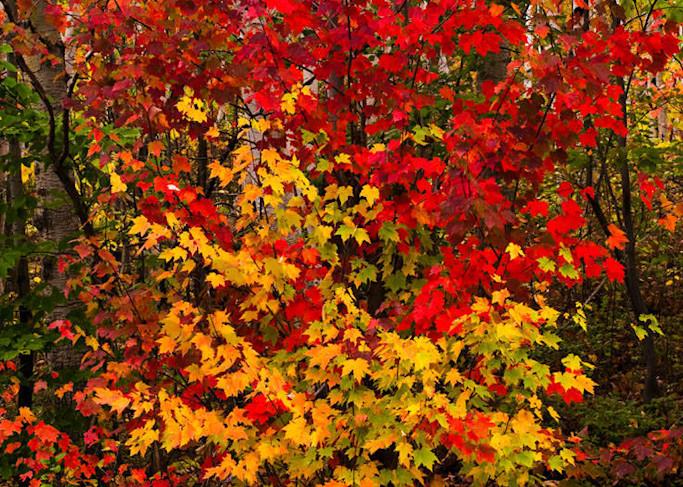 Fall Explosion Art | Scott Cordner Photography