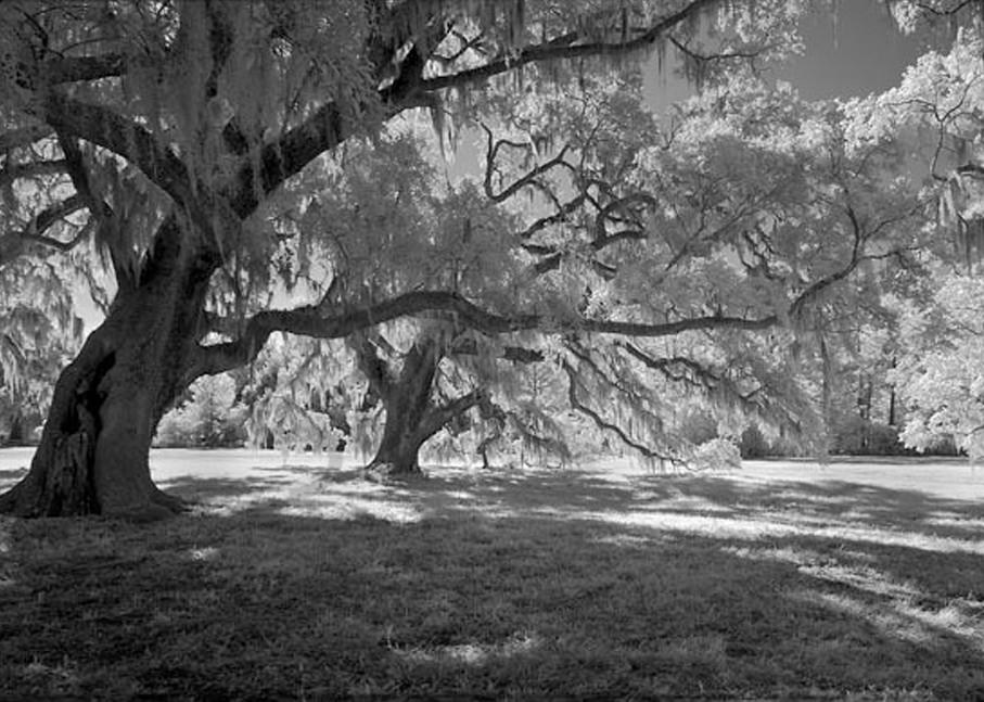 Broadfield Plantation No. Iii Photography Art | Robert Jones Photography