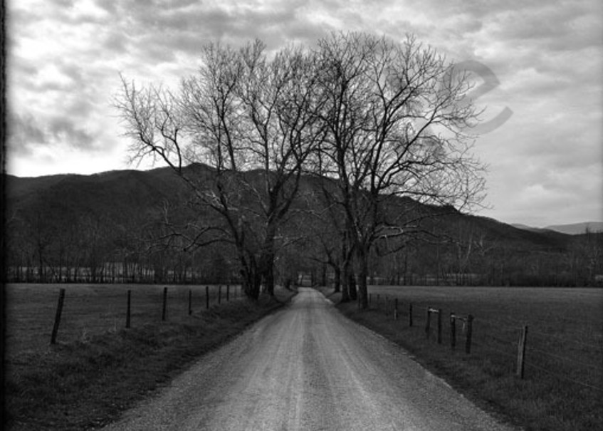 Cades Cove Tree No. Ii Photography Art | Robert Jones Photography