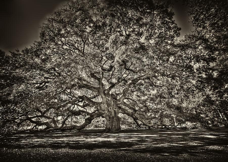 Angel Oak Photography Art | Robert Jones Photography