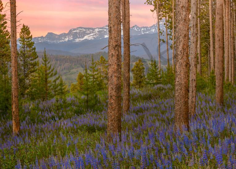 Purple Mountain Majestic Art   Scott Cordner Photography